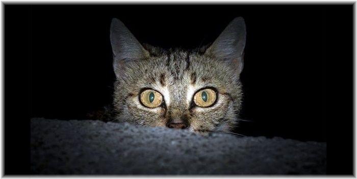 た なっ 猫 よう に 鳴く